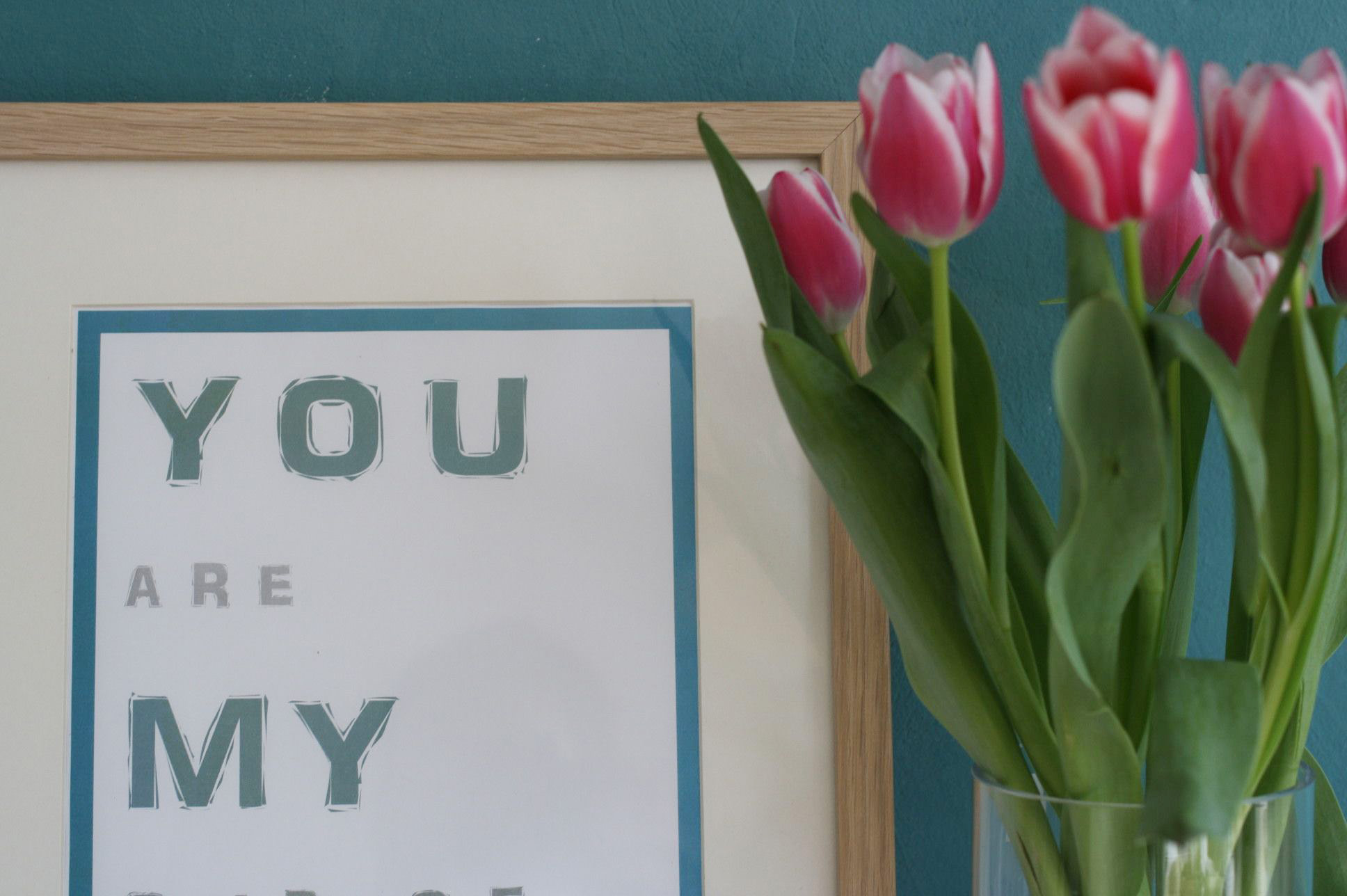 bild-tulpen-pink
