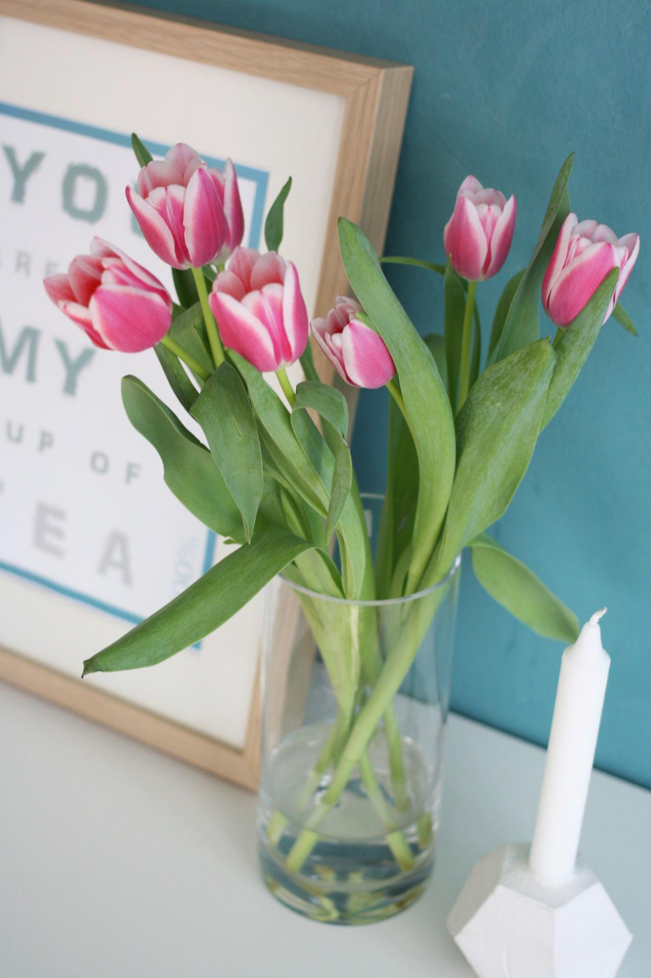 tulpen-kerze-pink
