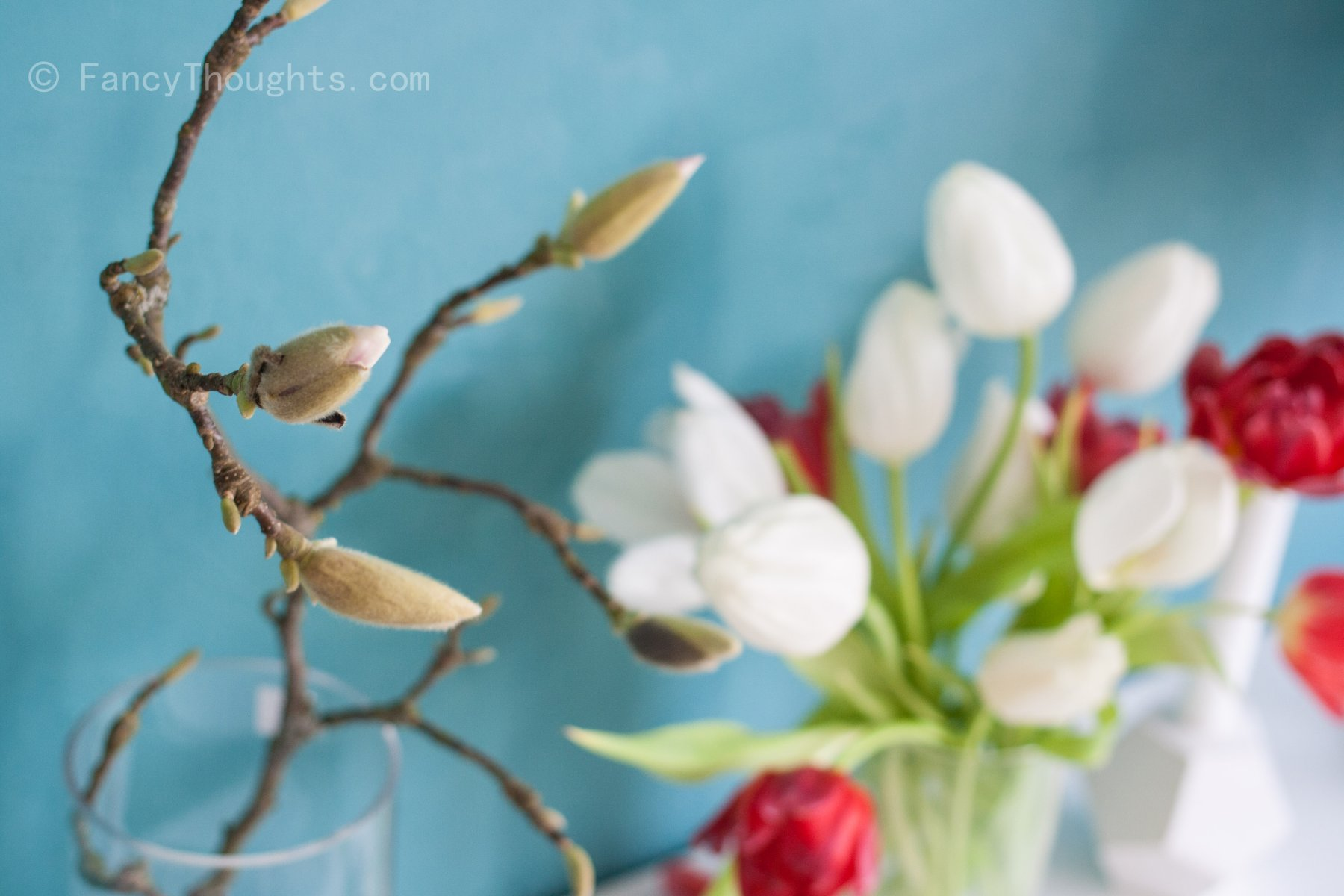 Mangnolie-Tulpen